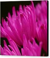Pink Fire 2 Canvas Print