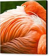 Pink Flamingo Canvas Print by Viacheslav Savitskiy