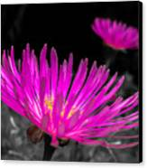 Pink Flower In A Green Grass - Splash Canvas Print by Fabio Giannini