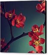 Pink Flower Canvas Print by Jelena Jovanovic