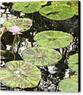 One Pink Water Lily With Lily Pads Canvas Print