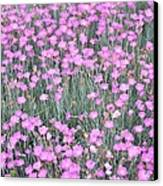 Pink Incarnated Canvas Print by Sonali Gangane