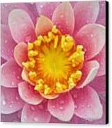 Pink Canvas Print by Karen Walzer