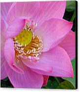 Pink Lotus Canvas Print by Dan A  Barker