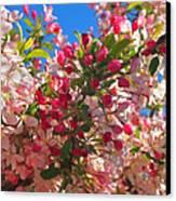 Pink Magnolia Canvas Print by Joann Vitali