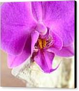 Pink Orchid On White Colored Driftwood Canvas Print by Sabine Jacobs