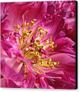 Pink Peony Flower Macro Canvas Print by Jennie Marie Schell