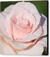 Pink Promise Canvas Print by Nancy Edwards