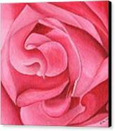 Pink Rose 14-1 Canvas Print by William Killen