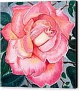 Pink Rose Canvas Print by Barbara Pelizzoli