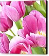 Pink Tulips Canvas Print by Elena Elisseeva