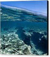 Pipe Reef. Canvas Print by Sean Davey