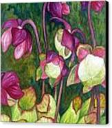 Pitcher Plant Flowers Canvas Print by Helen Klebesadel