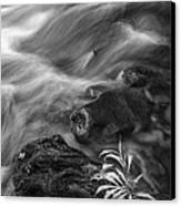 Little Plant Canvas Print by Jon Glaser