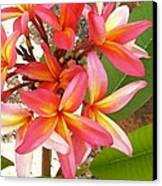 Plantation Plumeria Canvas Print