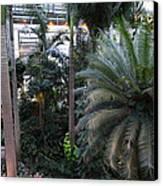 Plants - Us Botanic Garden - 011311 Canvas Print
