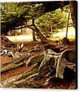 Point Lobos Whalers Cove Whale Bones Canvas Print by Barbara Snyder