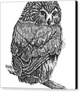 Pointillism Sawhet Owl Canvas Print by Renee Forth-Fukumoto