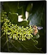 Pollination Canvas Print by John Monteath