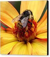 Pollinator  Canvas Print by Melisa Meyers