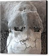 Pompeii Ash Skeleton Canvas Print by Gregory Dyer