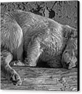 Pooped Puppy Bw Canvas Print