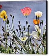 Poppies Canvas Print by Dana Patterson