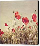 Poppies Canvas Print by Diana Kraleva
