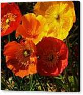 Poppy Bouquet Canvas Print by Helen Carson