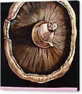 portobello in Fushia Canvas Print by Shelley Laffal