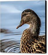 Portrait Of A Duck Canvas Print by Bob Orsillo