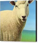 Portrait Of A Sheep Canvas Print