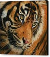 Portrait Of A Tiger Canvas Print by David Stribbling