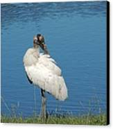 Posing Wood Stork Canvas Print