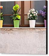 Potted Flowers 01 Canvas Print by Rick Piper Photography