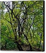 Poudre Trees Canvas Print by Baywest Imaging