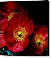 Pretty As A Poppy Canvas Print by Helen Carson