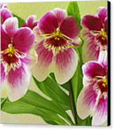 Pretty Faces - Orchid Canvas Print
