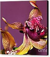 Pretty Orchid On Pink Canvas Print