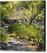 Pristine Forest Stream Canvas Print by Cindy Rubin