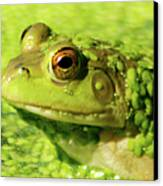 Profiling Frog Canvas Print by Optical Playground By MP Ray