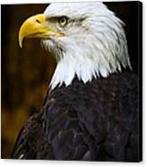 Proud Eagle Profile Canvas Print by Athena Mckinzie