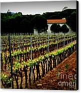 Provence Vineyard Canvas Print by Lainie Wrightson