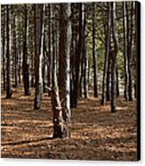 Provin Trails Park Forest Canvas Print by Richard Gregurich