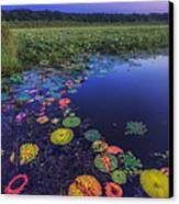 Psychedelic Shore - Great Meadows Nwr Canvas Print by Sylvia J Zarco