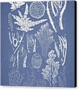 Pterosiphonia Fibrillosa Canvas Print