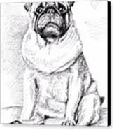 Pug Anton Canvas Print