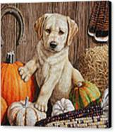 Pumpkin Puppy Canvas Print by Crista Forest