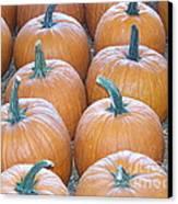 Pumpkins Galore Canvas Print