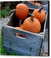 Pumpkins In Wooden Crates Canvas Print